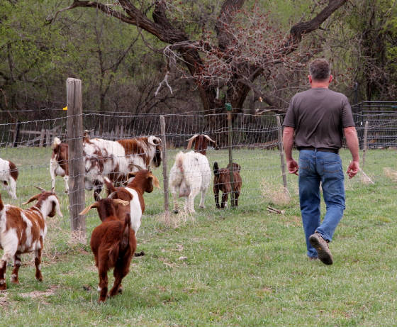 Spotted Boer Goats for sale in AL, AK, AZ, AR, CA, CO, CT, DE, FL, GA, ID, IL, IN, IA, KS, KY, LA, ME, MD, MA, MI, MN, MS, MO, MT, NE, NV, NH, NJ, NM, NY, NC, ND, OH, OK, OR, PA, RI, SC, SD, TN, TX, UT, VT, VA, WA, WV, WI, WY